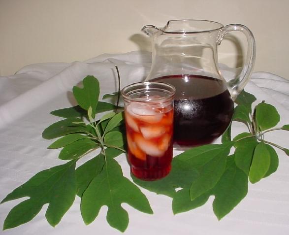 cold sassafras tea